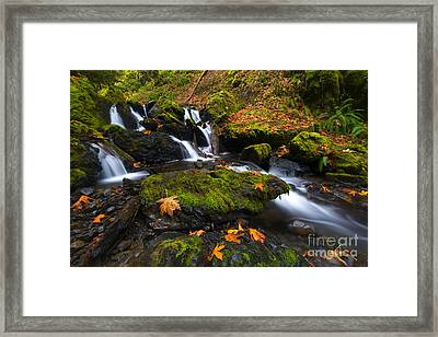 Fallen Along The Way Framed Print by Mike Dawson