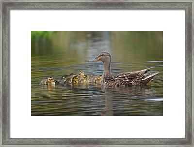 Family Ties 3 Framed Print by Fraida Gutovich