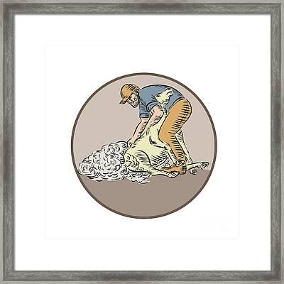 Farmworker Shearing Sheep Circle Etching Framed Print by Aloysius Patrimonio