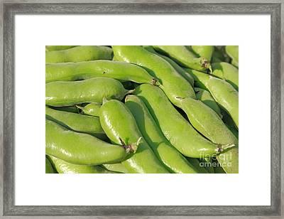 Fava Bean Pods Framed Print by Gaspar Avila