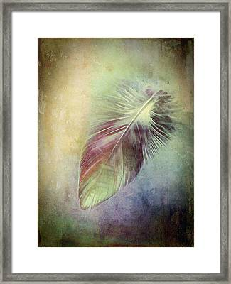 Feather Framed Print by Ann Powell