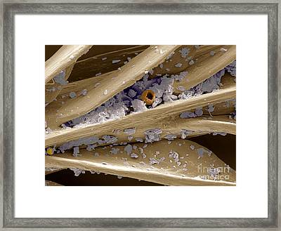 Feather Framed Print by Scimat