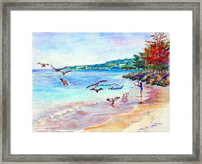 Feeding The Pelicans Framed Print by Estela Robles