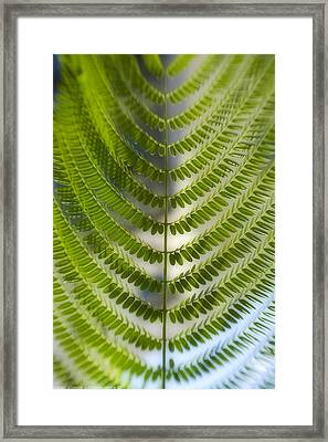 Fern Plant Framed Print
