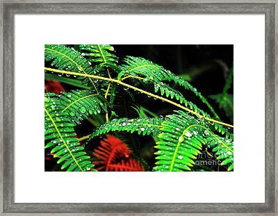 Ferns And Raindrops Framed Print by Thomas R Fletcher