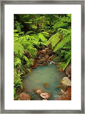 Ferns Framed Print by Gaspar Avila