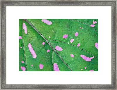 Infectious Framed Print by Az Jackson