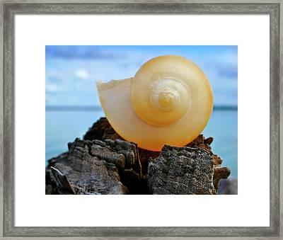 Framed Print featuring the photograph Fibonacci by Skip Hunt