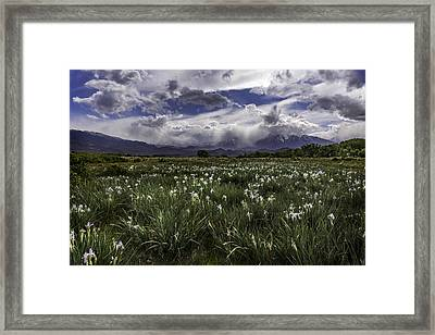 Field Of Iris Framed Print by Cat Connor