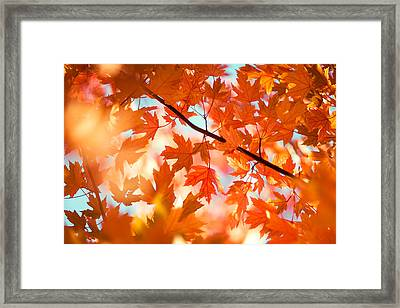 Field Of Orange Framed Print