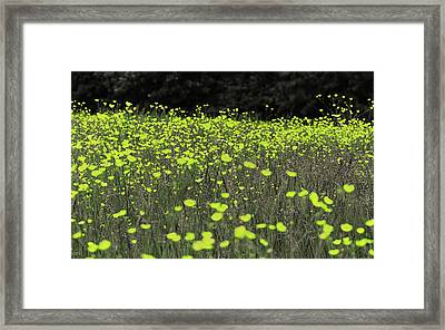 Fields Of Gold Framed Print by Martin Newman