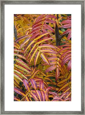 Fiery Foliage  Framed Print