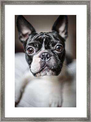 Fina Framed Print