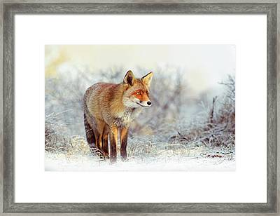 Fire 'n Ice Framed Print by Roeselien Raimond