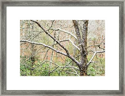 First Snow Cranberry Wilderness Framed Print