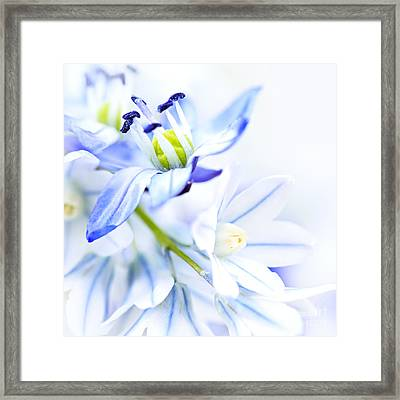 First Spring Flowers Framed Print by Elena Elisseeva