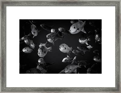 Fla-150811-nd800e-26096-bw-selenium Framed Print