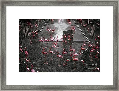 Framed Print featuring the photograph Flamingo by Setsiri Silapasuwanchai