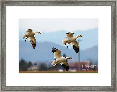 Flaps Down Framed Print by Mike Dawson