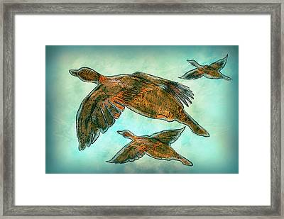 Flight Framed Print by Jack Zulli