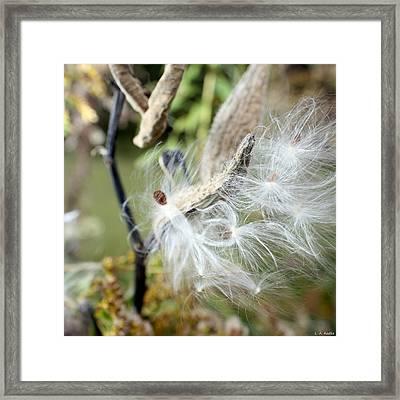 Flight Of The Milkweed Framed Print