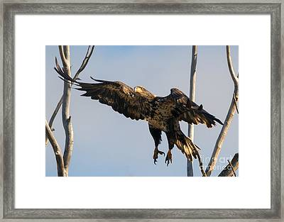 Flight Training Framed Print by Mike Dawson