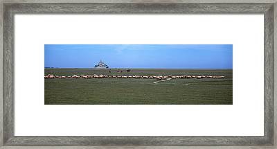 Flock Of Sheep Grazing In A Field Framed Print