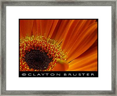 Floral Framed Print by Clayton Bruster