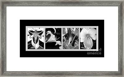 Floral Collage Framed Print by Sue Stefanowicz