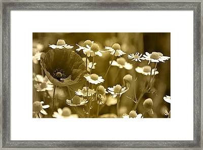 Floral Gold Collection Framed Print