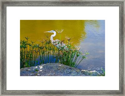 Florida Heron Framed Print by Andrea Simon