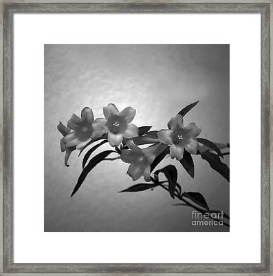 Flower 8-18 Framed Print by Skip Willits