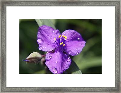 Framed Print featuring the photograph Flower by Heidi Poulin