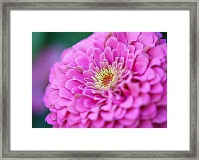 Flower Macro Framed Print by Edward Myers
