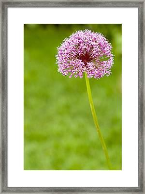 Flower Framed Print by Sebastian Musial