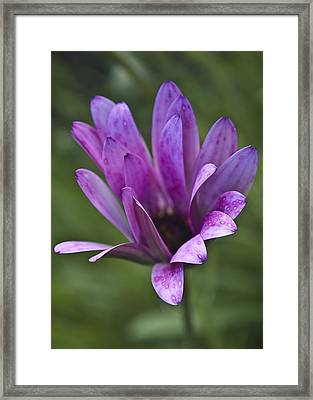 Flower Framed Print by Svetlana Sewell