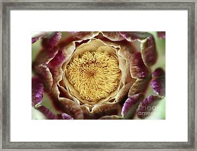 Flowering Houseleek Framed Print by Michal Boubin