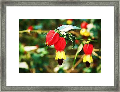 Flowering Plant Framed Print by Michael C Crane