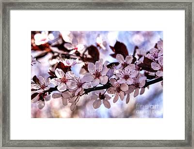 Flowering Plum Framed Print