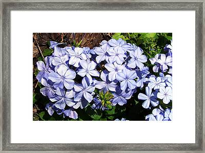 Flowers Framed Print by Evelyn Patrick