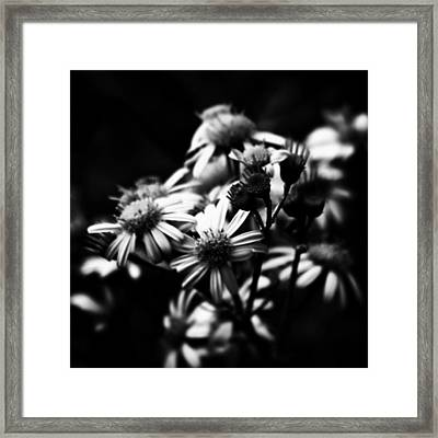 #flowers #flower #tagsforlikes #petal Framed Print