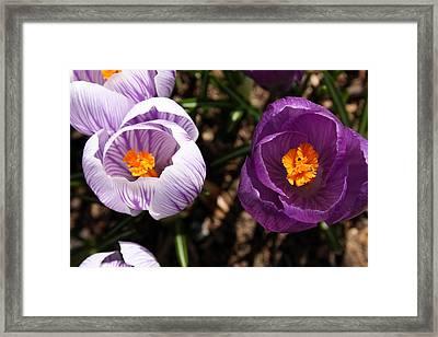 Flowers Framed Print by Jeff Porter
