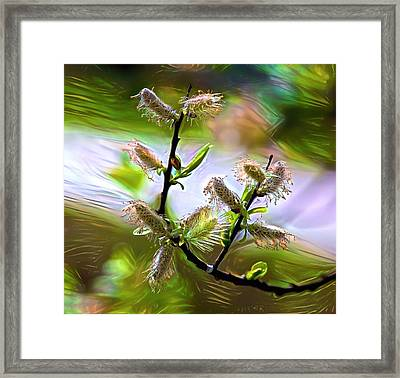 Flowers Willow Spring Framed Print by Evgeny Parushin