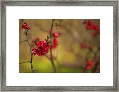 Flowery Framed Print