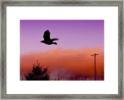 Fly By Framed Print by Chrissy Gibbs
