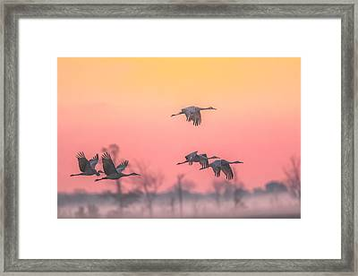 Flying Into The Light And Fog Framed Print