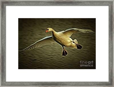 Flying Swan Framed Print by Michal Boubin