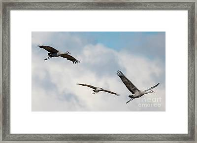Follow The Leader Framed Print by Mike Dawson