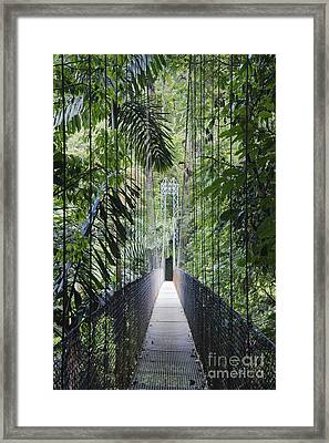 Footbridge In Costa Rican Forest Framed Print by Jeremy Woodhouse