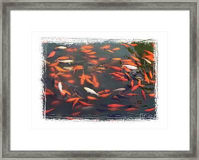 Koi Pond With Framing Framed Print by Carol Groenen
